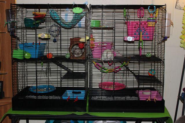 Клетка с различными игрушками для крыс